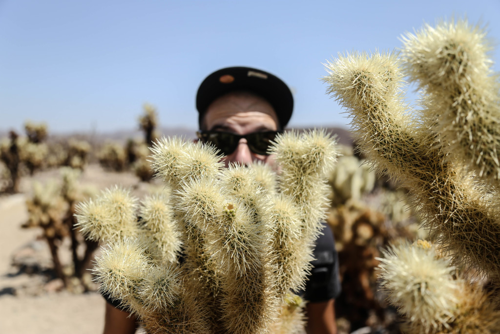 joshua-tree-national-parc-chola-cactus-garden
