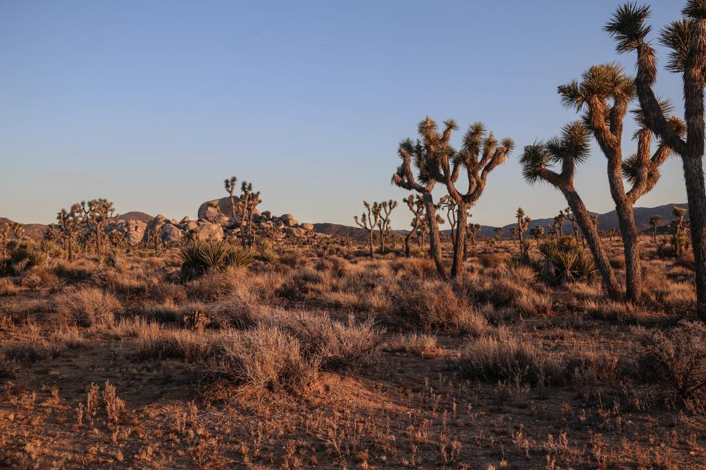 joshua-tree-national-parc-california