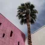 Coz palm trees make me happy  Hello Palm Springshellip