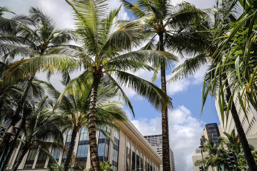 oahu-honolulu-ville-palmiers-waikiki